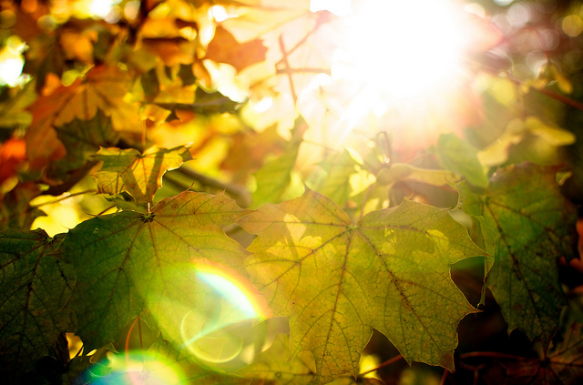Autumn-Light-13